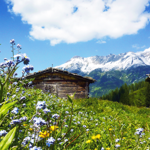 Summer vacation in the heart of the Zillertal
